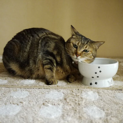 1. Cat-Friendly Raised Elevated Ceramic Water Bowl Stand, Top 10 Best Bowls For Cats Reviews