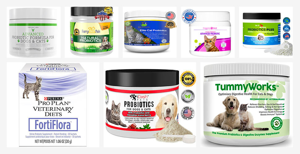 Best Probiotics for Cats/Dogs