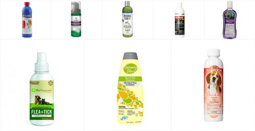 Best Cat Flea Shampoos