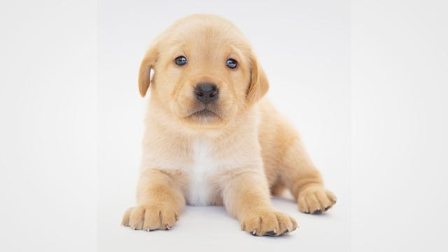 Ultimate Guide: How To Choose A Good Puppy?