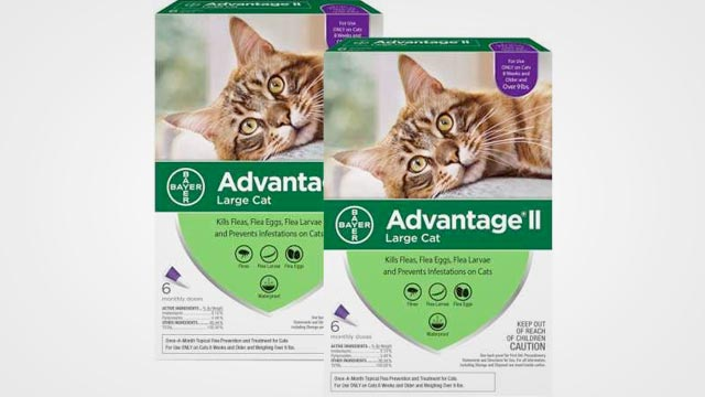 Best Cat Flea Treatment in 2019: Reviews and Buying Guide