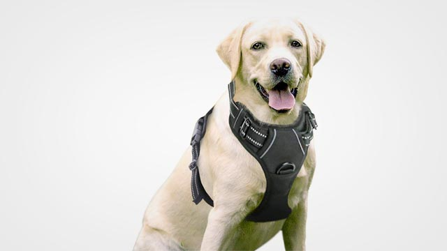 10 Best Dog Harness in 2019 Reviews