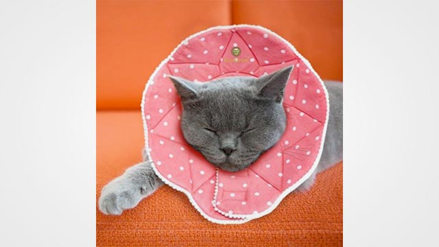 10 Best Dog and Cat Cones in 2019: Reviews and Buyer Guide