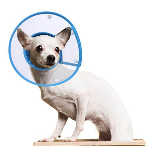 PETBABA Recovery Collar, Clear Cone