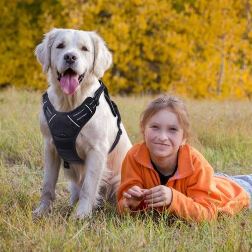 10 Best Dog Harness Reviews of 2019