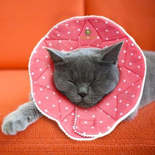 10 Best Dog and Cat Cones Reviews of 2019