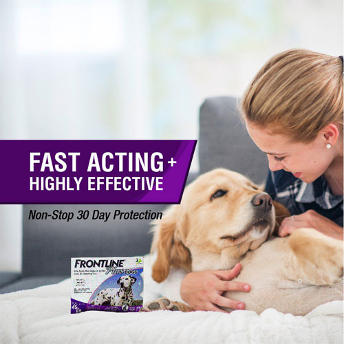 5 Best Flea Medicines for Your Dog Reviews of 2019