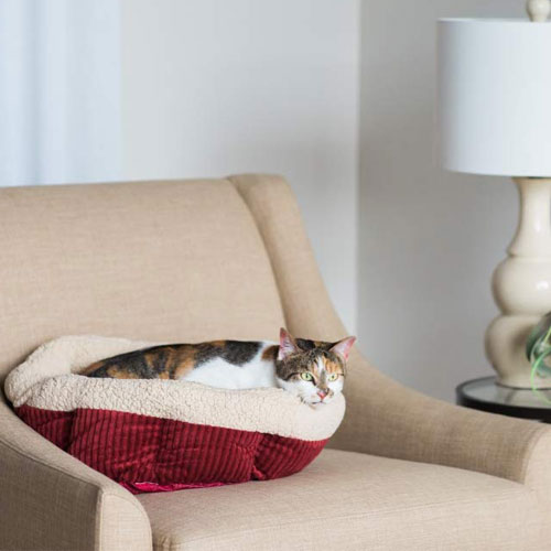 10 Best Heated Cat Beds Reviews of 2019
