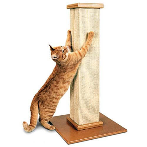 10 Best Cat Scratchers Reviews of 2019