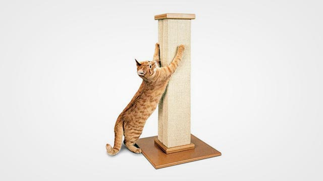 Best Cat Scratchers in 2019: Reviews and Buying Guide